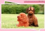 dog-color2.jpg