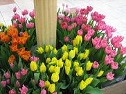 spring.2.JPG