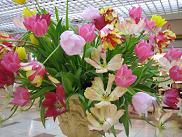spring.3.JPG